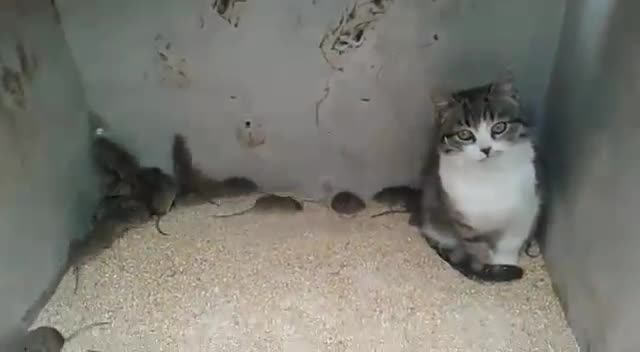 mlada bliska maca